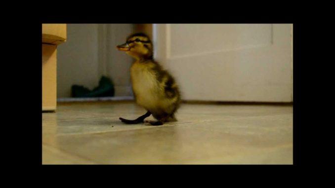 Cute-Chick-2020