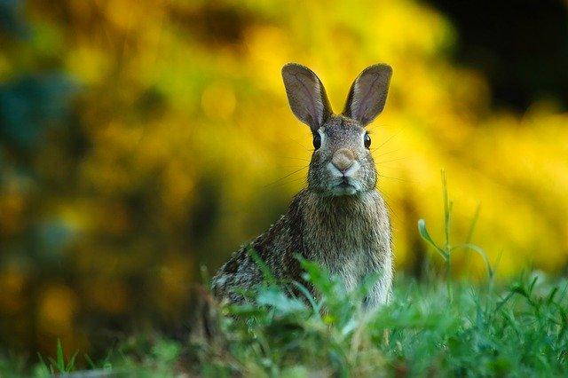 Rabbit-In-Headlights-The-Leslie-Link